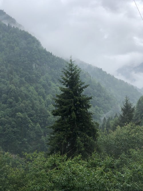 Photo of Spruce-fir Forest