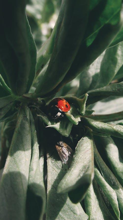 Ilmainen kuvapankkikuva tunnisteilla hyönteinen, hyönteistiede, kasvi, kovakuoriainen