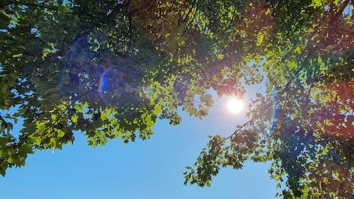 ağaç, doğa, Güneş, yapraklar içeren Ücretsiz stok fotoğraf