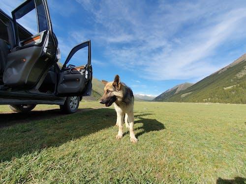 Fotobanka sbezplatnými fotkami na tému fotografia, pes, širokouhlý, zviera