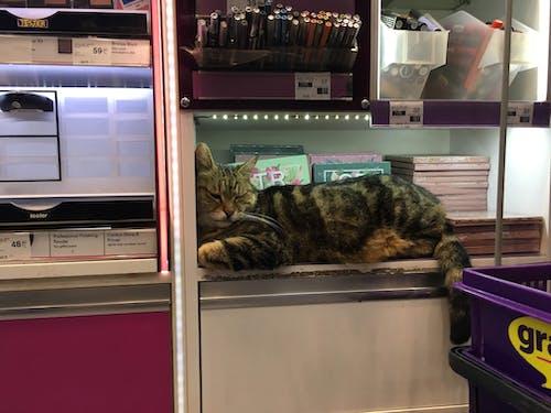 Fotobanka sbezplatnými fotkami na tému kozmetika, mačací, mačka, nakupovať