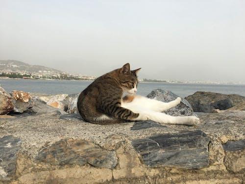 Fotobanka sbezplatnými fotkami na tému mačací, mačka, more, pláž