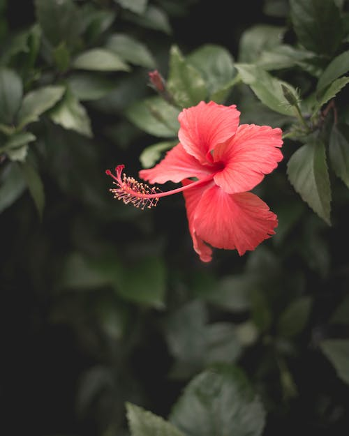 Free stock photo of flowers, moody, nature, nature photography