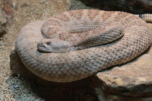คลังภาพถ่ายฟรี ของ งู