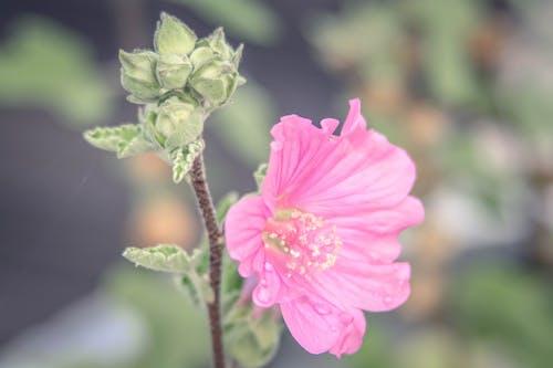 Ảnh lưu trữ miễn phí về những bông hoa màu hồng