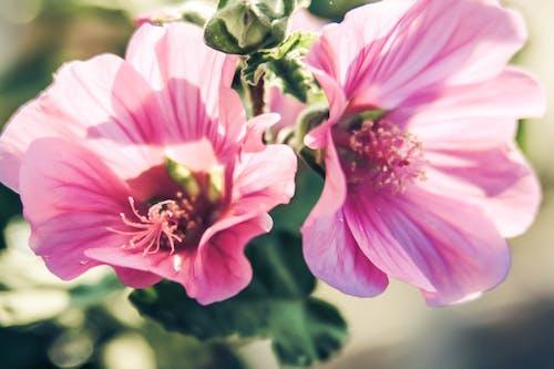 Ảnh lưu trữ miễn phí về hoa mùa hè, mùa xuân