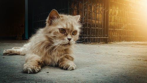Free stock photo of cat, dark, kitten, moody