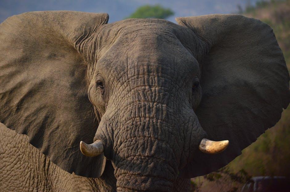 avoiding the elephant