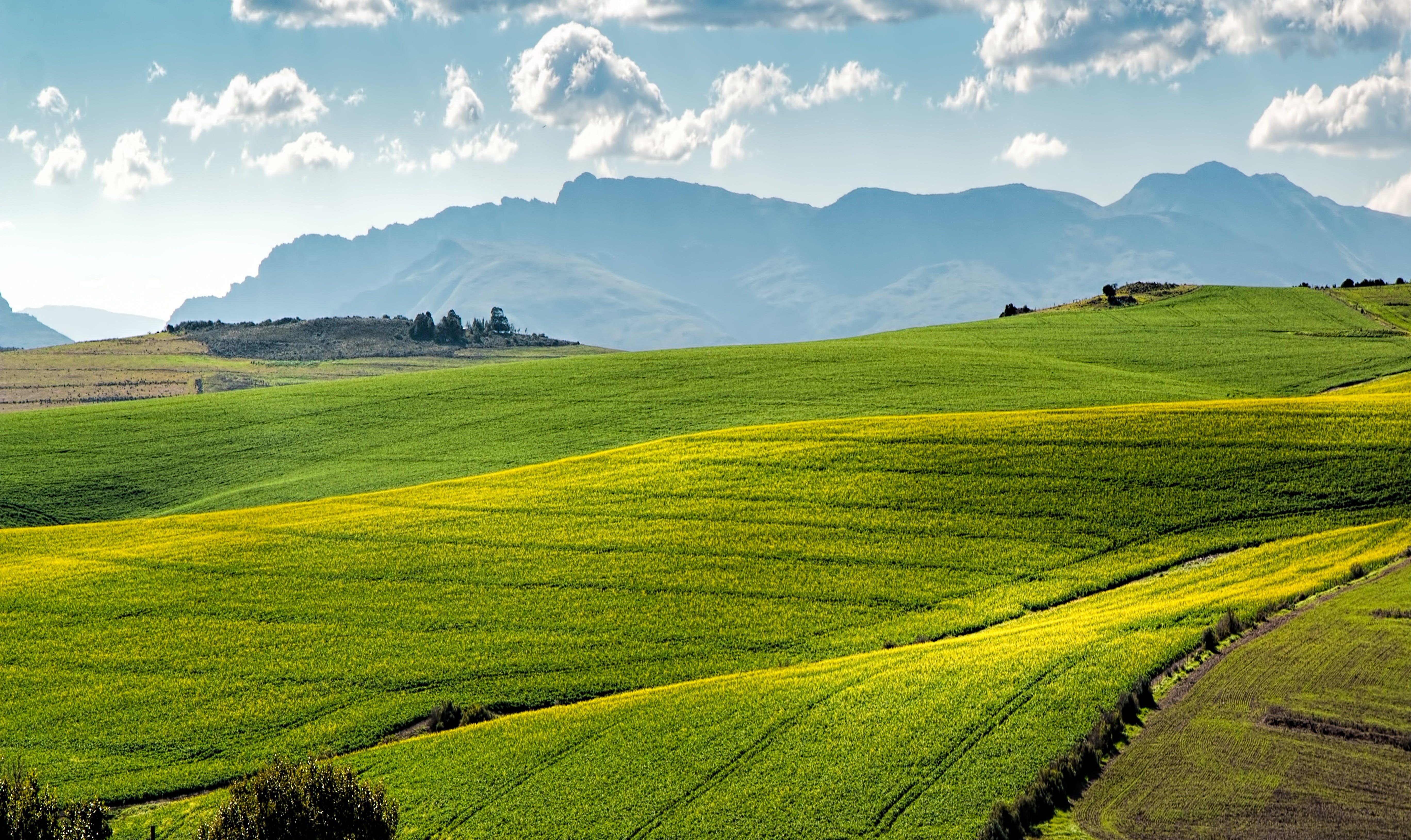 Foto profissional grátis de agricultura, área, céu, chácara