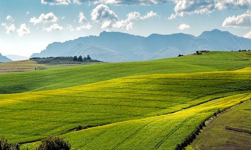 คลังภาพถ่ายฟรี ของ การทำฟาร์ม, ทุ่งหญ้า, ทุ่งเลี้ยงสัตว์, ท้องฟ้า