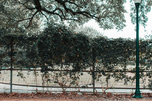 Бесплатное стоковое фото с ветви деревьев, вид, городской, дневной свет