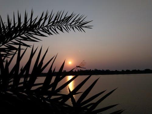 Foto stok gratis matahari terbenam