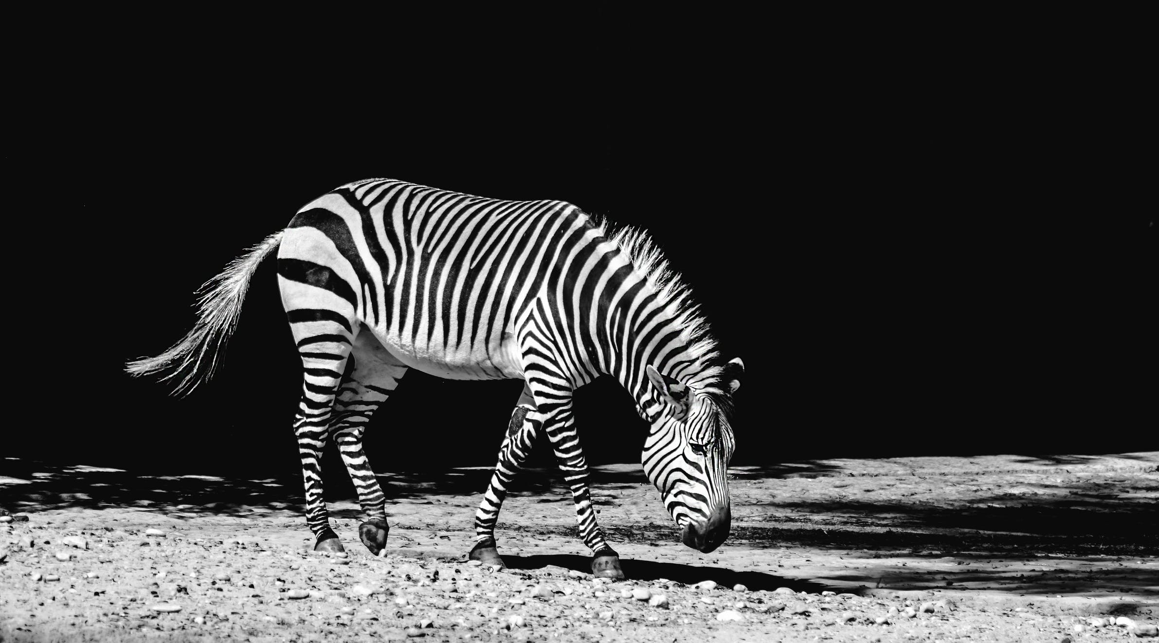 Free stock photo of black-and-white, walking, zebra crossing, pattern