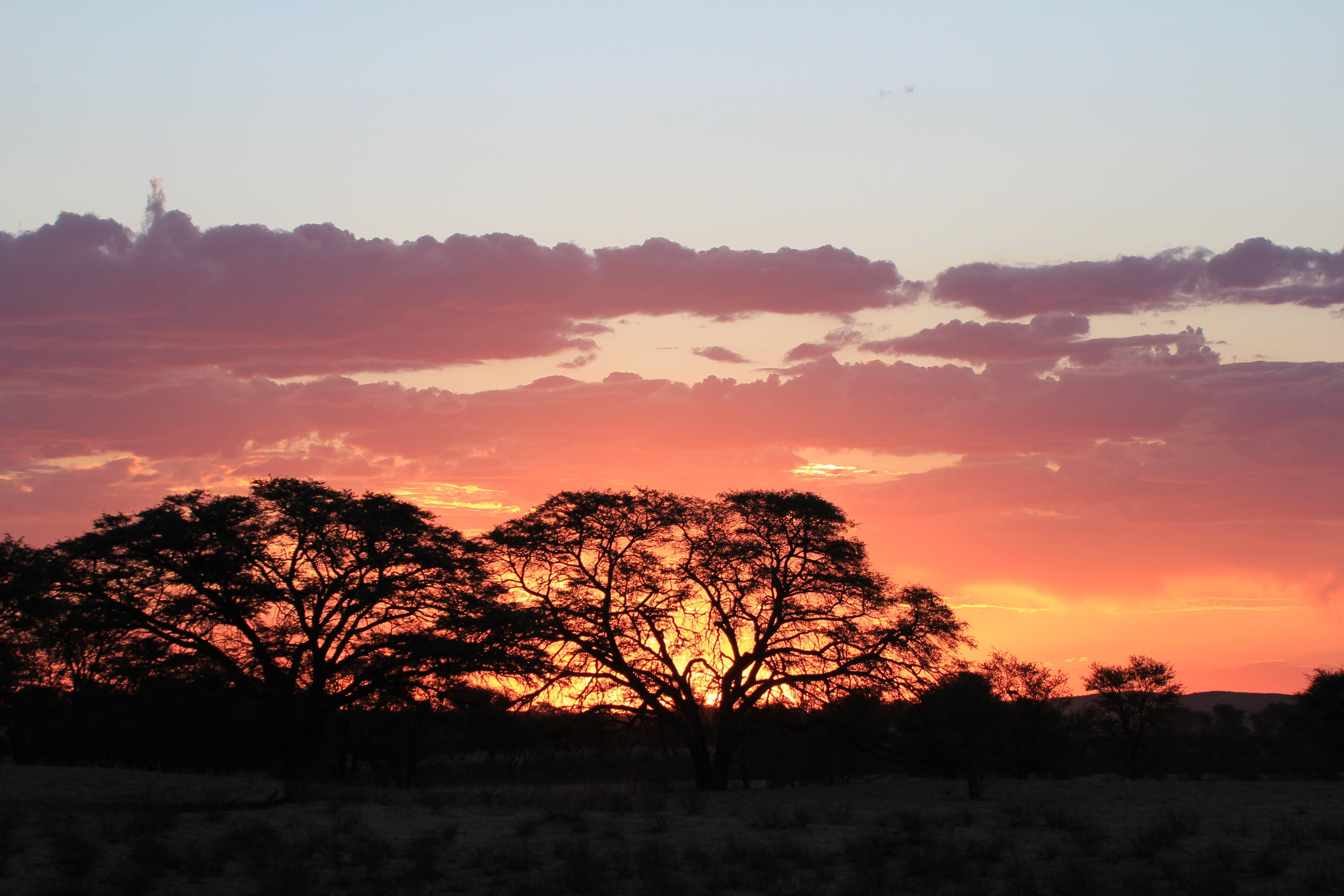 Gratis stockfoto met achtergrondlicht, bomen, dageraad, daglicht