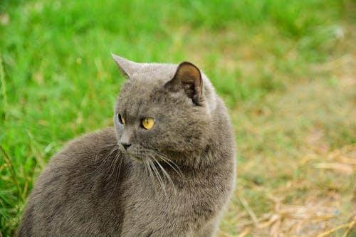 Gratis arkivbilde med katt