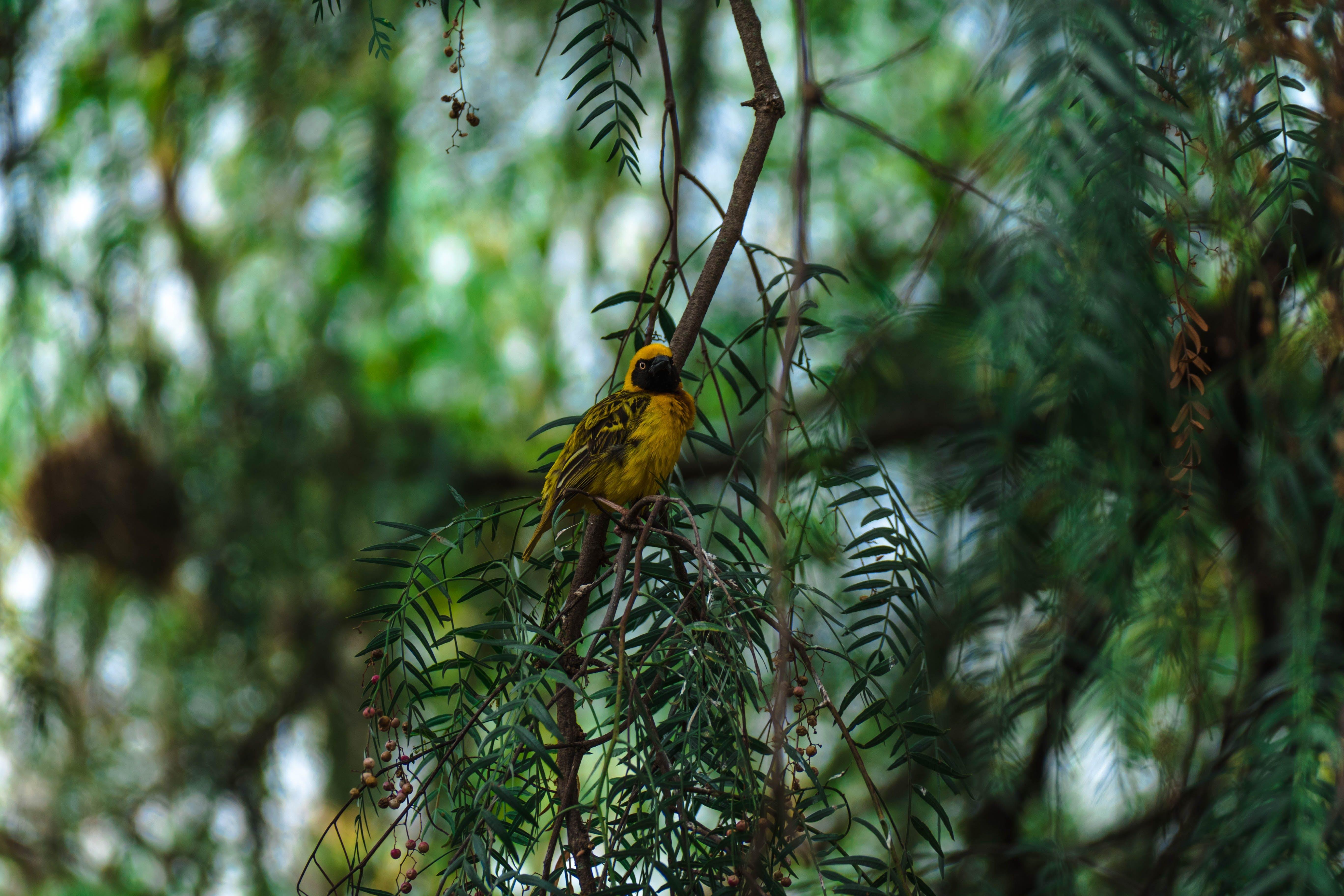 Free stock photo of bird, africa, safari, wildlife