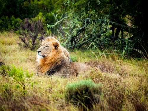 Immagine gratuita di alberi, animale, animale selvatico, cacciatore