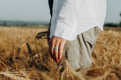 Close-Up Photo of Person Standing on Wheat Field