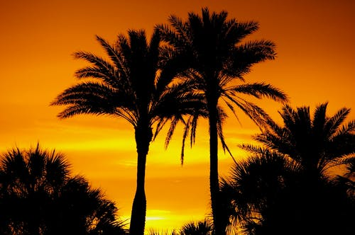 オレンジ色, オレンジ色の空, ゴールデンアワー, ココナッツの木の無料の写真素材