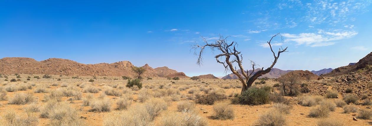 Bare Tree on Desert Land