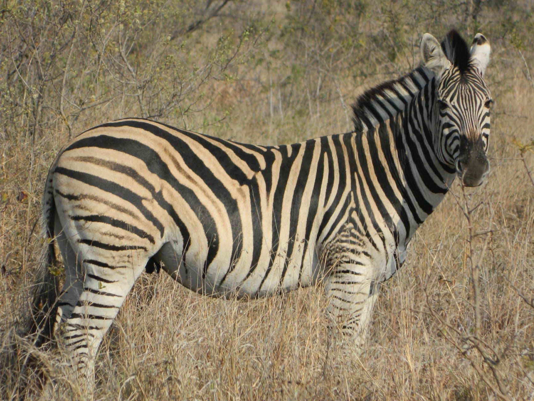 zebra wildlife south africa - HD1280×960
