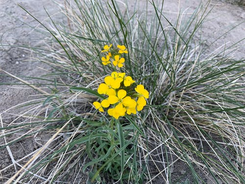 Foto d'estoc gratuïta de flor, flors, flors grogues, flors silvestres