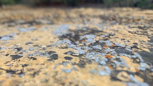 Foto d'estoc gratuïta de concentrar-se, molsa, motlle, roca