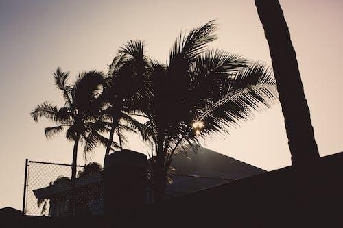 Δωρεάν στοκ φωτογραφιών με δύση του ηλίου, καλοκαίρι, παραλία