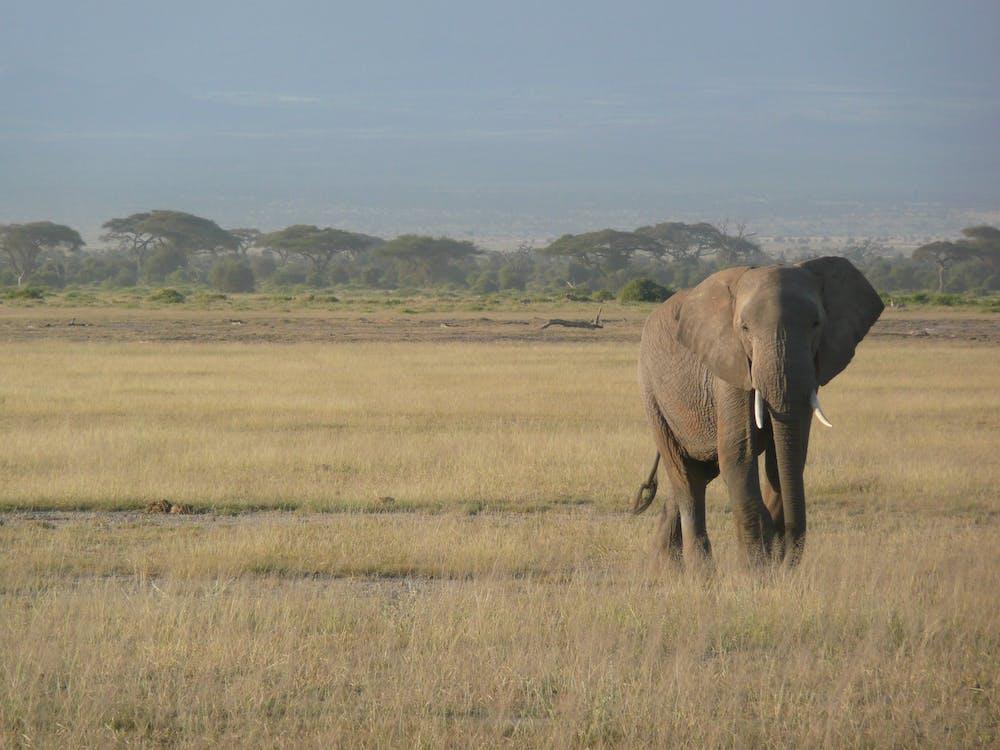 Kostenloses Stock Foto zu afrika, baumstamm, elefant