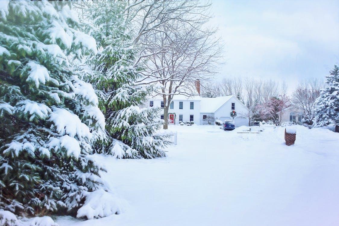 bäume, draußen, einfrieren