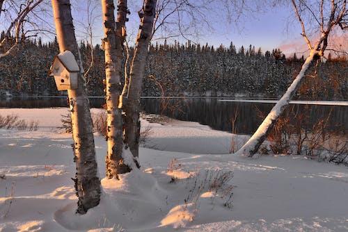 Бесплатное стоковое фото с белый, ветвь, вода, дерево