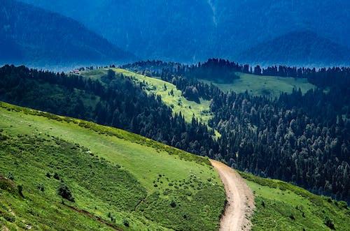 Základová fotografie zdarma na téma denní světlo, divočina, dřevo, hora