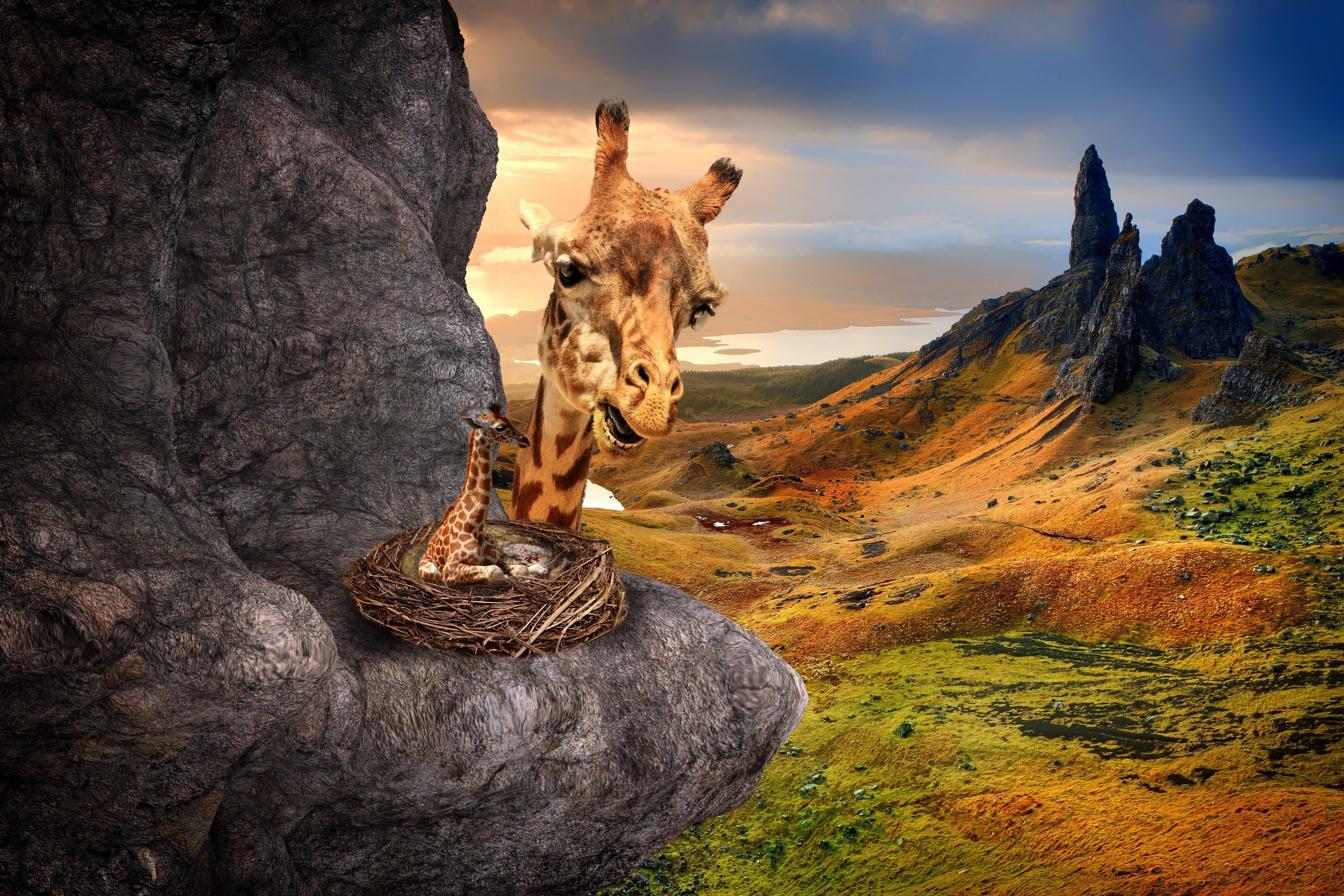 Free stock photo of landscape, hidden, surreal, fantasy