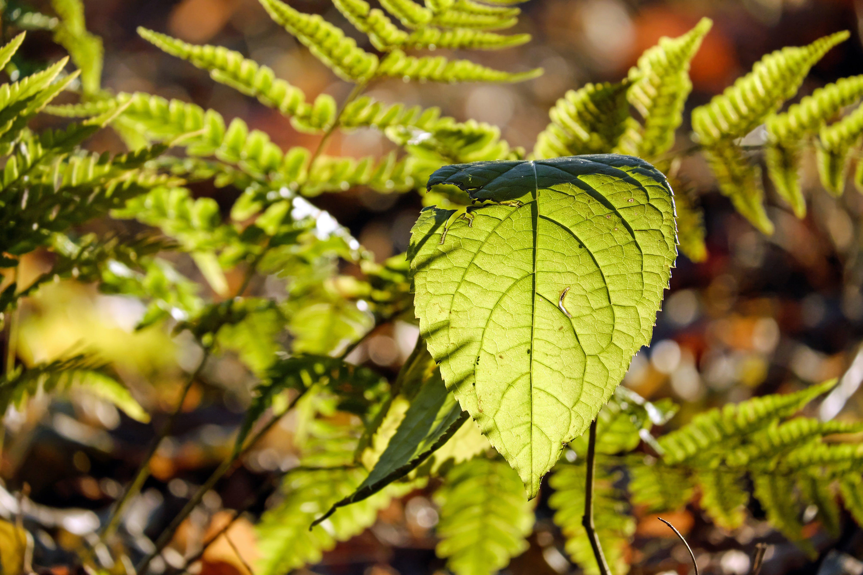 Kostenloses Stock Foto zu grün, makro, natur, pflanzen