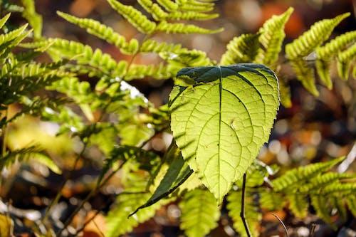 Kostenloses Stock Foto zu grün, makro, nahansicht, natur