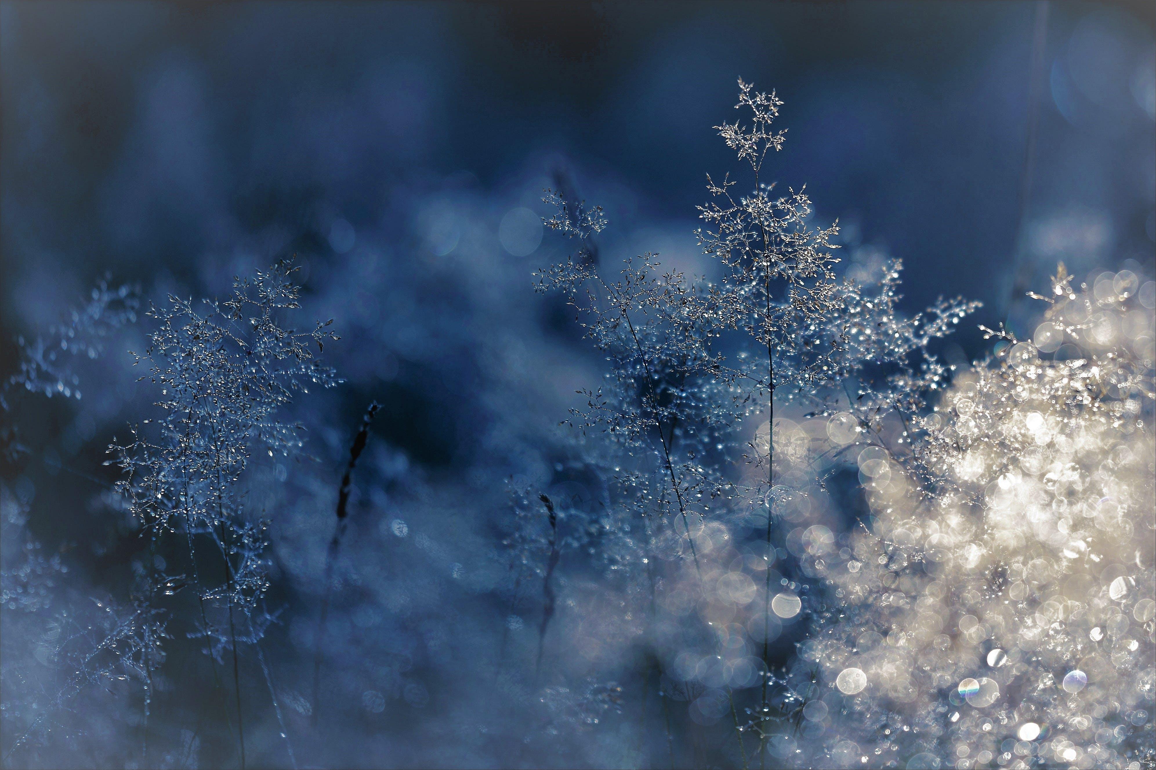 Kostenloses Stock Foto zu kalt, schnee, holz, licht