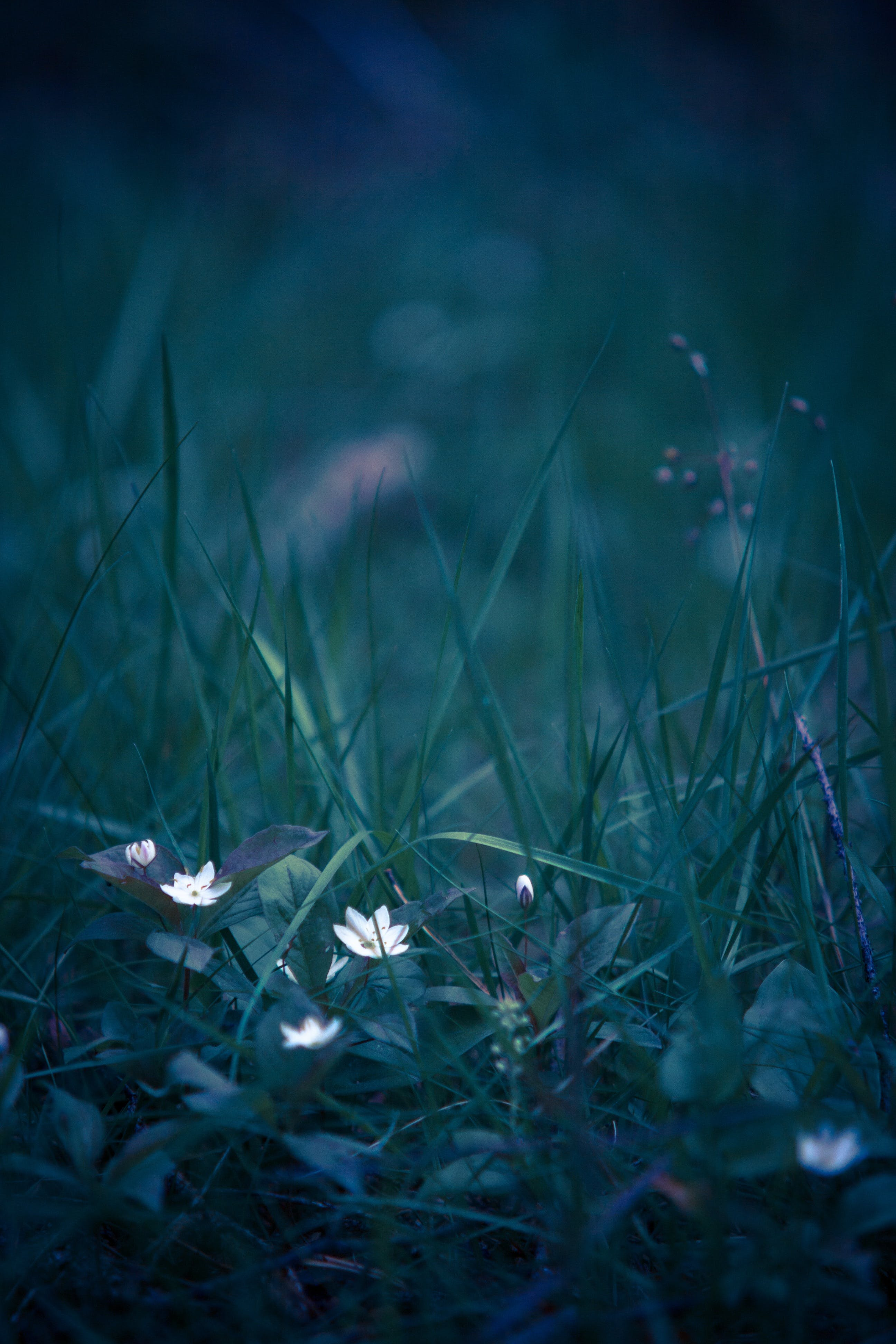 White Petaled Flower on Grass