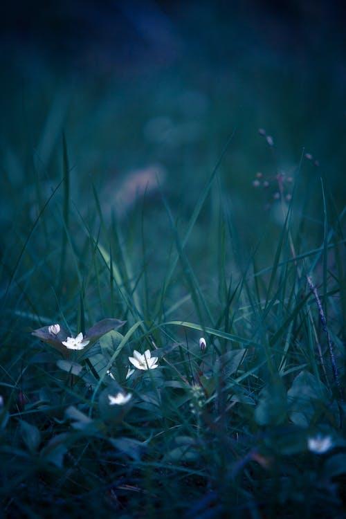 Weiße Blütenblattblume Auf Gras
