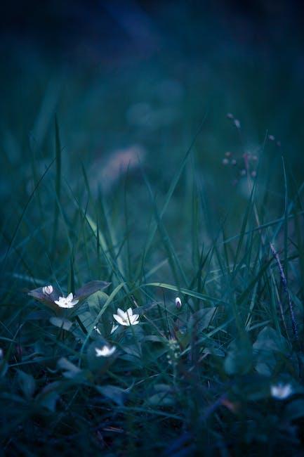 Beautiful blur close up delicate