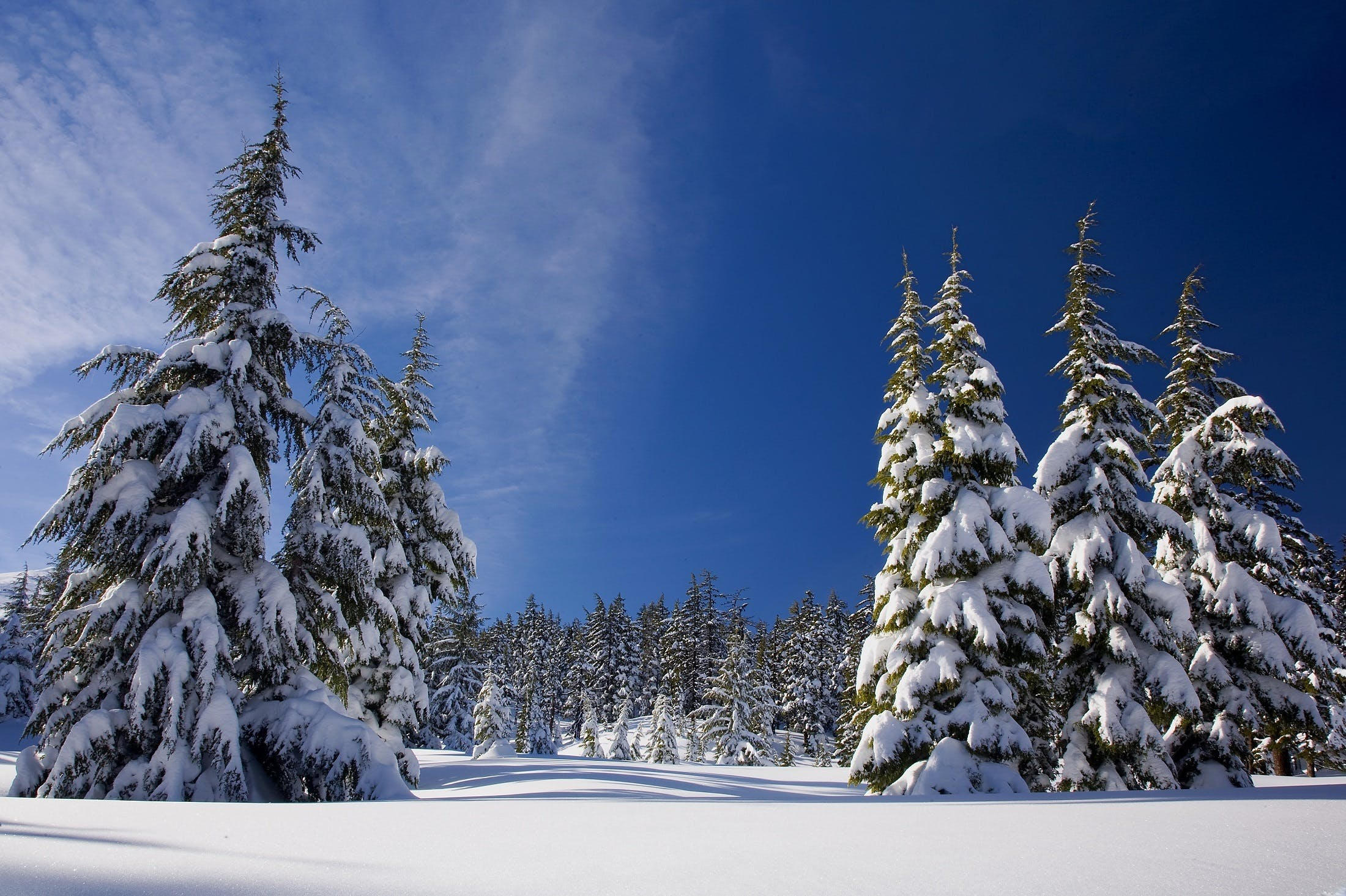 Kostenloses Stock Foto zu bäume, eis, himmel, holz