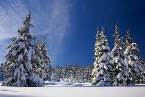 Foto stok gratis alam, dingin, Es, hutan