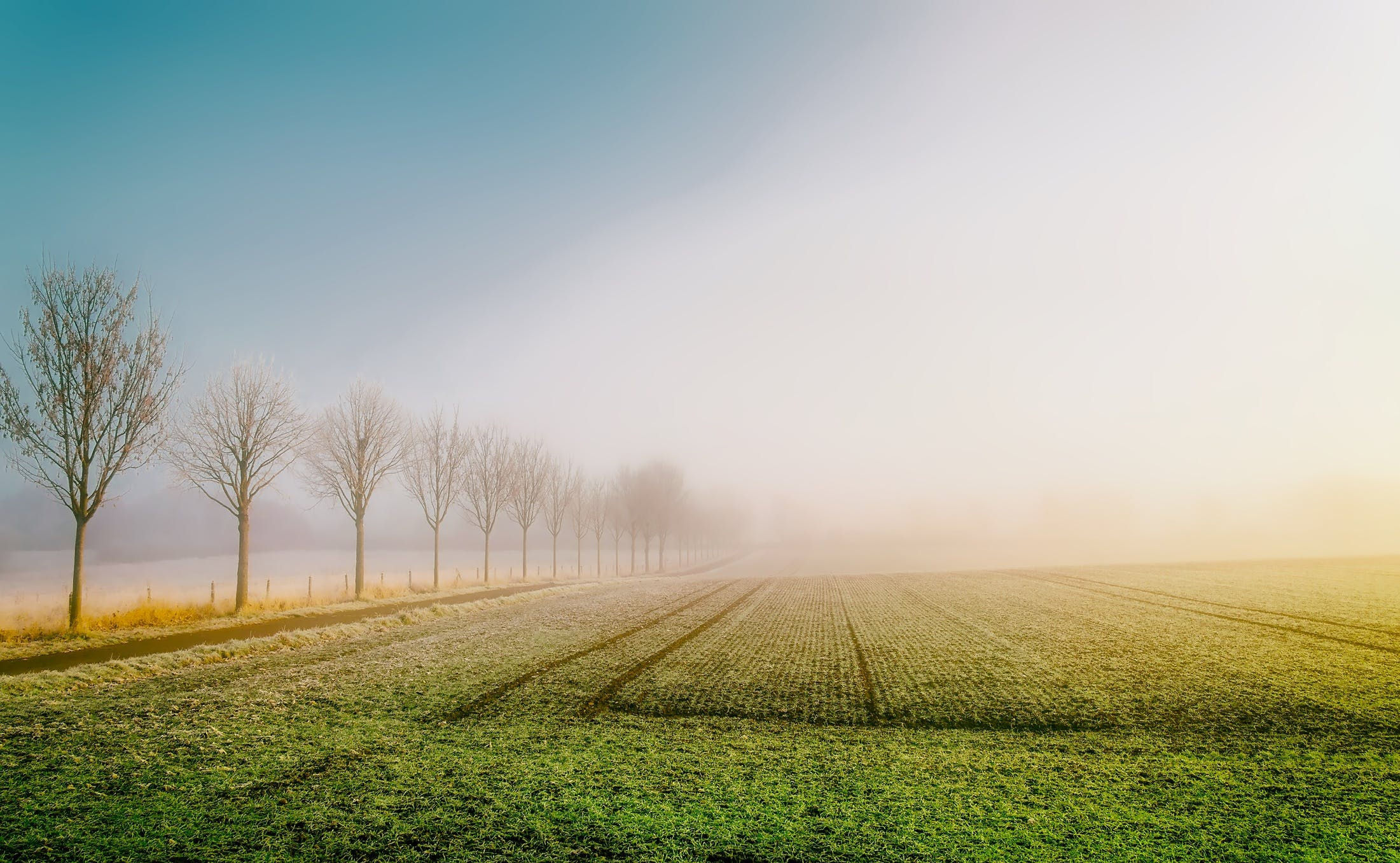 Gratis stockfoto met akkerland, boerderij, bomen, gewas