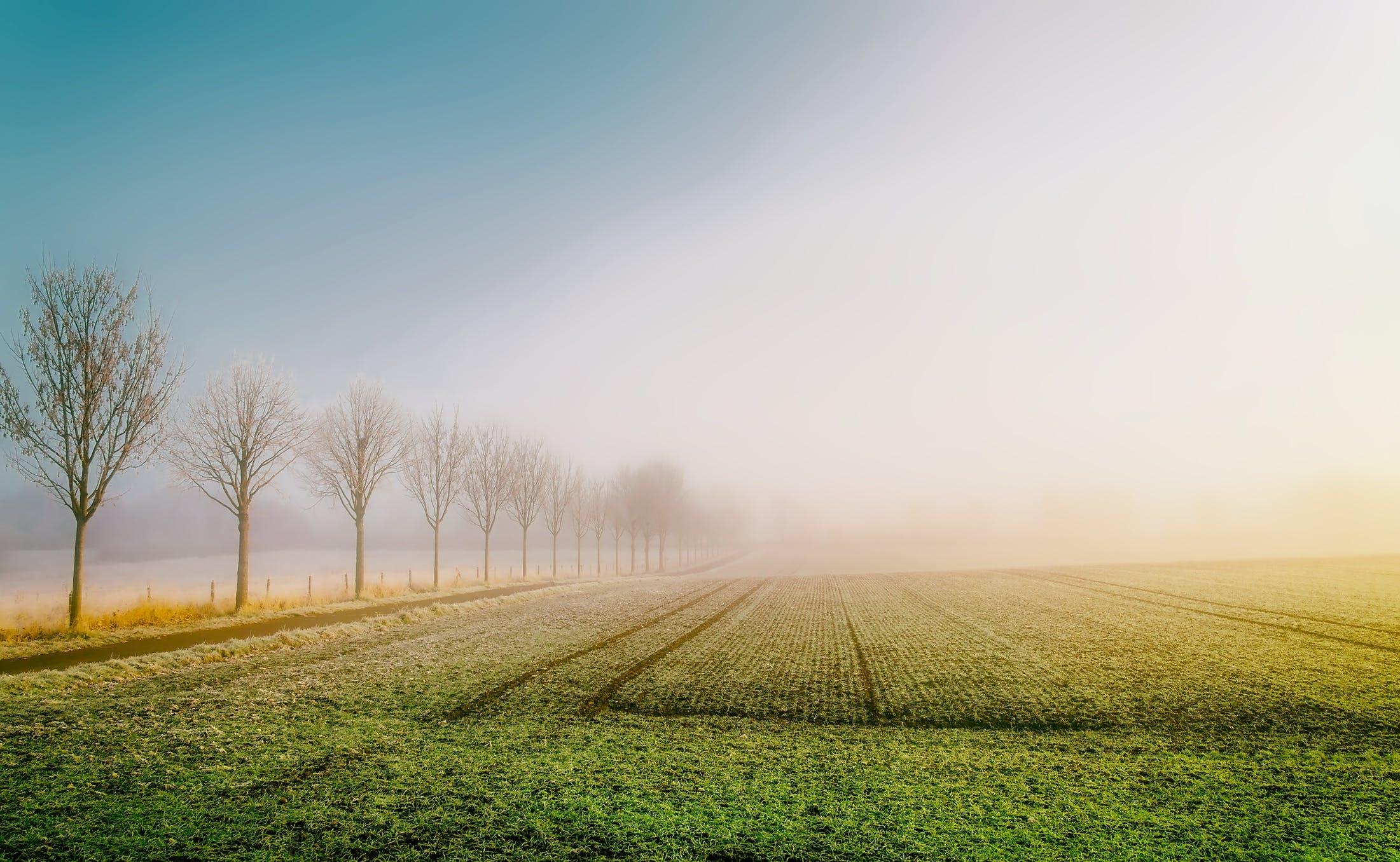 countryside, crop, farm