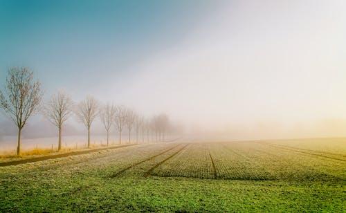 Photos gratuites de arbres, brouillard, clairière, culture