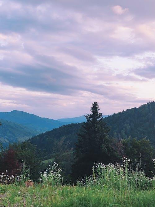 Photo of Trees Near Mountains