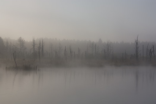 Free stock photo of fog, autumn, swamp, moor