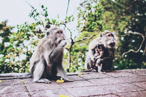 Photo of Three Primates Sitting on Surface