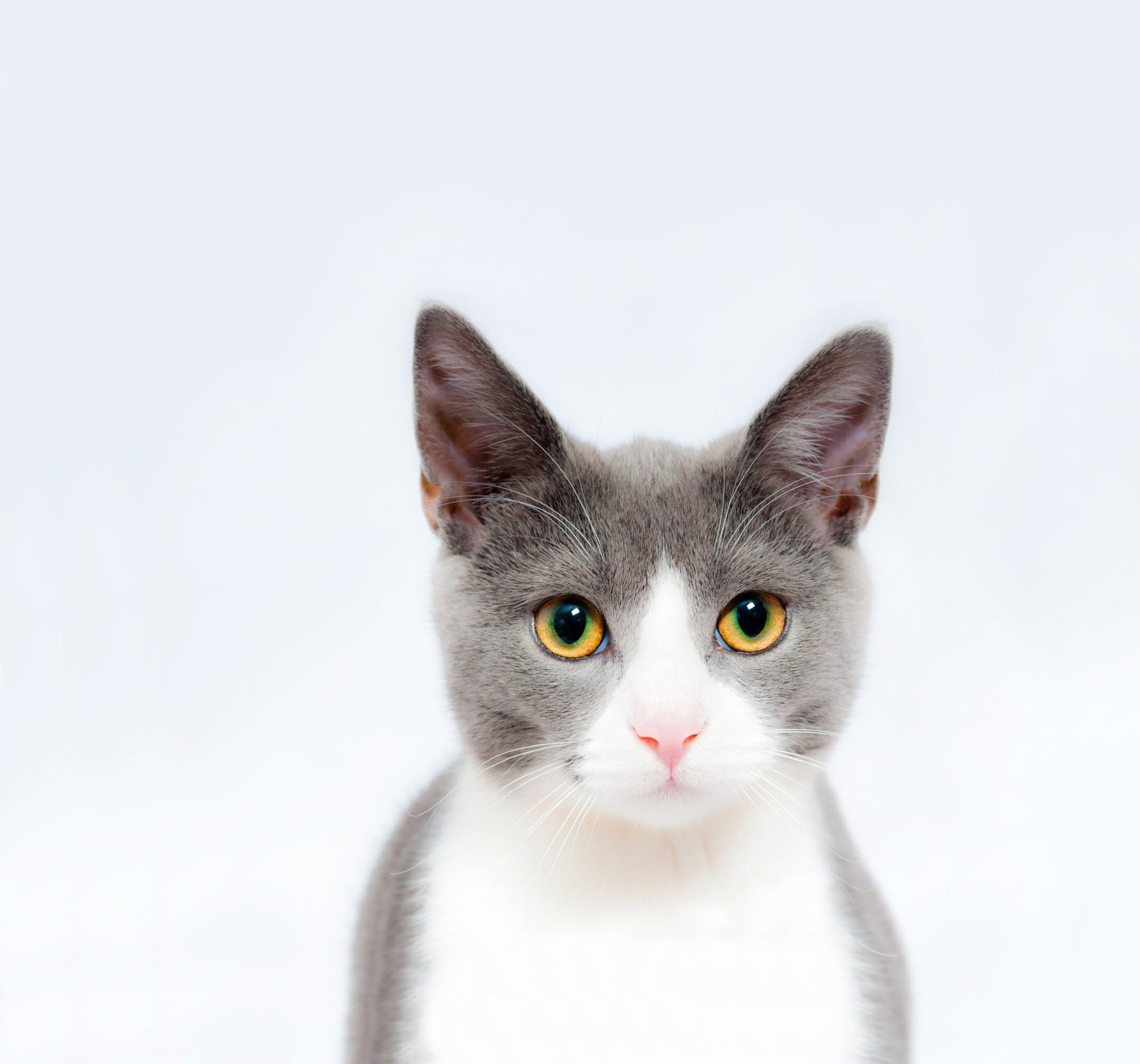 Learn To Speak Cat – Simon's Cat | LOGIC #11