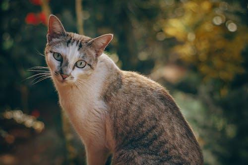 Безкоштовне стокове фото на тему «Вибірковий фокус, домашня тварина, кішка, котячі»