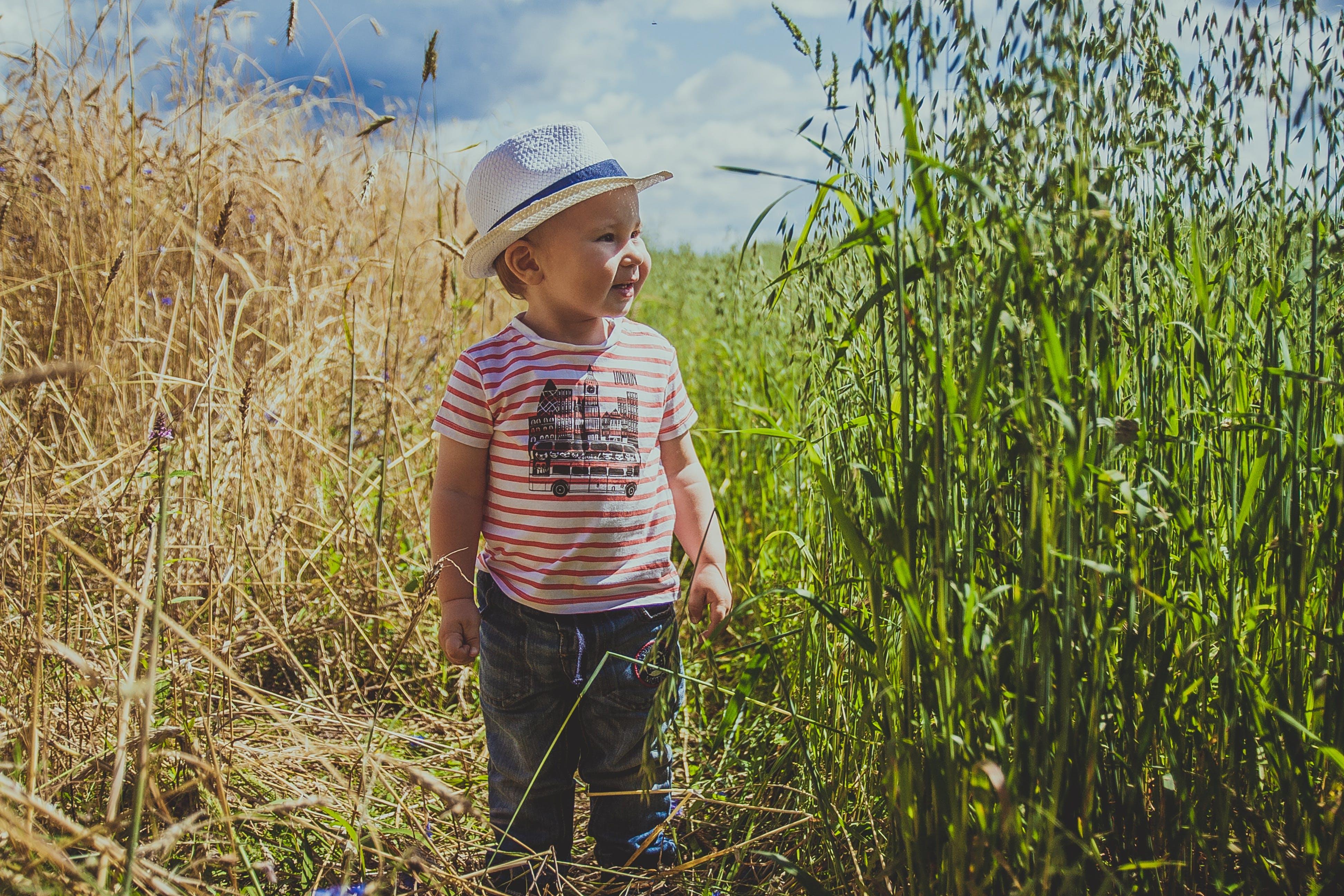 Gratis lagerfoto af afgrøde, agerjord, baby, bane